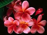 20120307123308-flores.jpeg